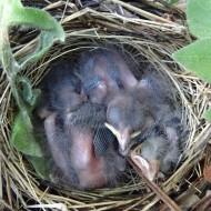 Chicks sleeping